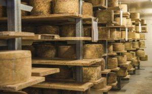 Tasmanian cheeses. Bike Odyssey tour